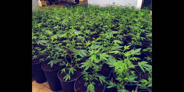 La prison pour le cultivateur  de cannabis - La DH