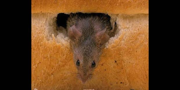 Une souris morte dans un plat surgelé - La DH