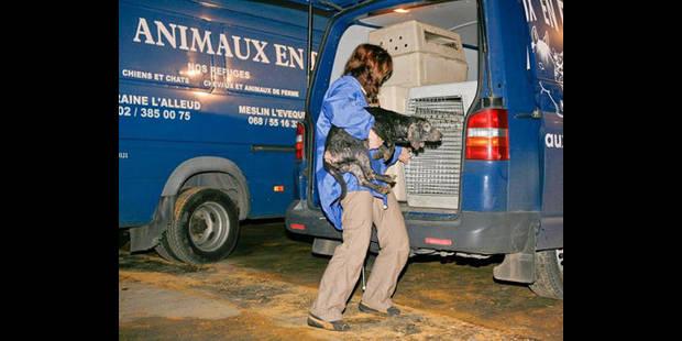 La femme aux 112 chiens condamnée - La DH