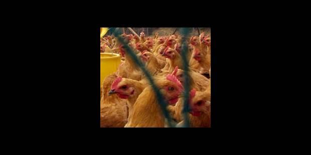 Un vétérinaire aurait succombé à la peste aviaire! - La DH