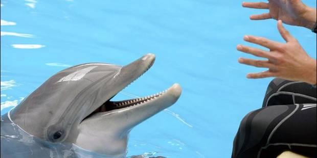 """Les delphinariums : """"une pratique barbare"""" - La DH"""