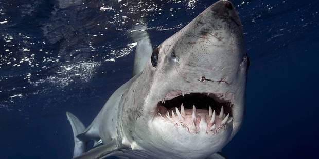 Une adolescente tuée par un requin à la Réunion - La DH