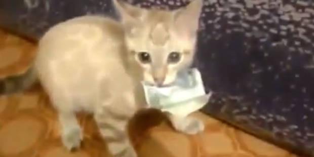 Un chat refuse de rendre un billet de banque - La DH