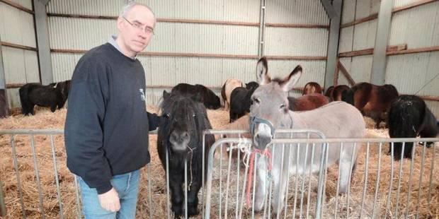 """""""L'Afsca menace d'abattre mes chevaux"""" - La DH"""