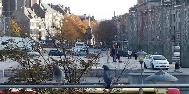 Où sont passés les pigeons ? - La DH