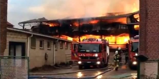 25 bovins périssent dans les flammes - La DH