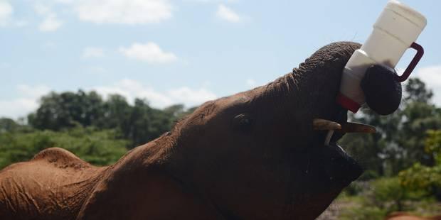 Le Brésil aura le premier sanctuaire d'éléphants d'Amérique latine - La DH