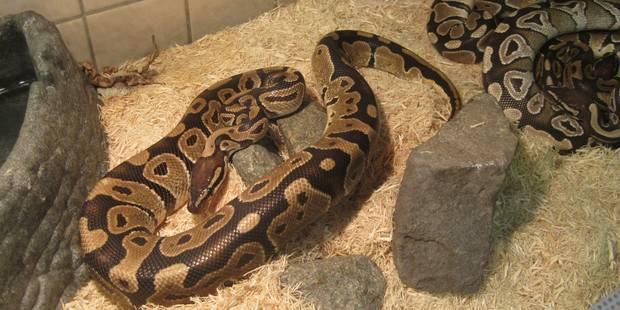 18 reptiles recueillis par la SPA à Charleroi - La DH