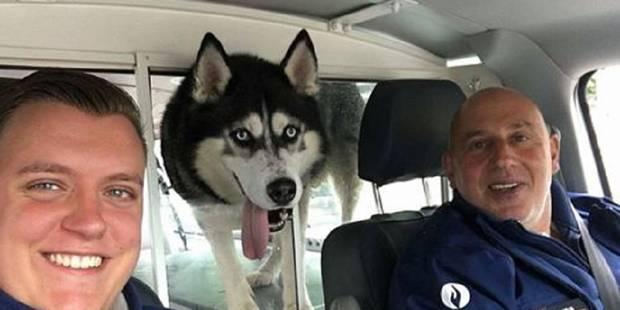 Heppignies: un husky sauvé par la police fédérale - La DH