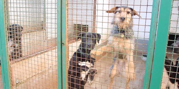 Sauvez un animal, adoptez dans les refuges - La DH