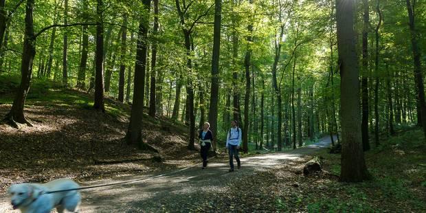 Les bois, parcs et forêts de Bruxelles fermés dès 17h jusque vendredi - La DH