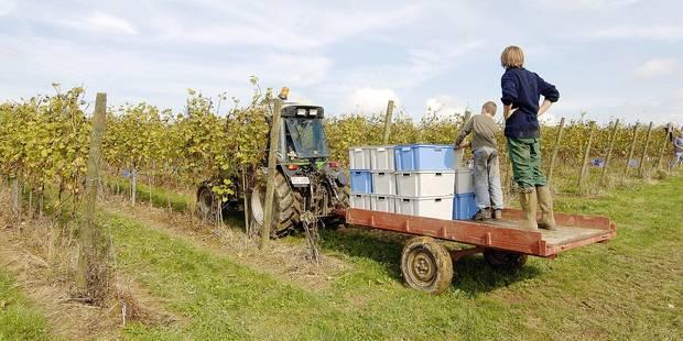 La Belgique se place sur la carte des vins: découvrez le palmarès 2016 - La DH