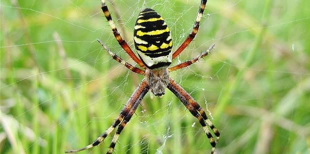 Beloeil : Araignées, nos bien aimées ! - La DH