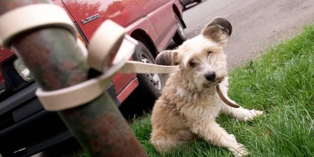 Quelles sanctions pour ceux qui abandonnent leur animal de compagnie au bord de la route en Belgique? - La DH