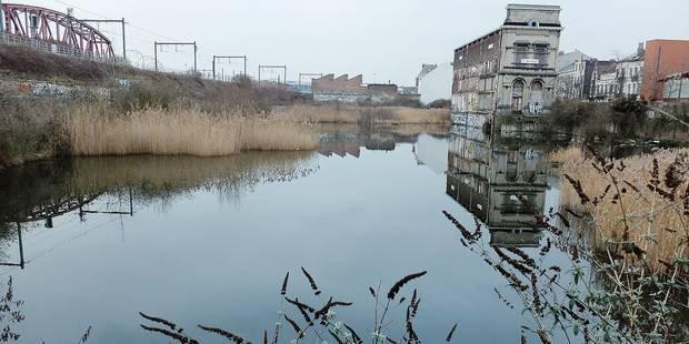 Forest: Le marais du Wiels se vide - La DH