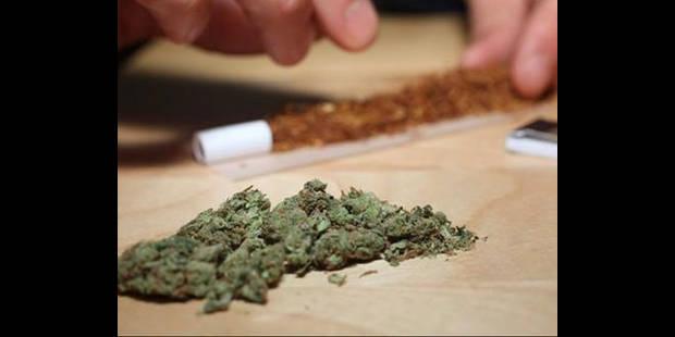 Les saisies de plants de cannabis ont presque doublé en 5 ans - La DH