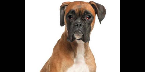 Suspension du prononcé pour avoir tué le chien de son voisin - La DH