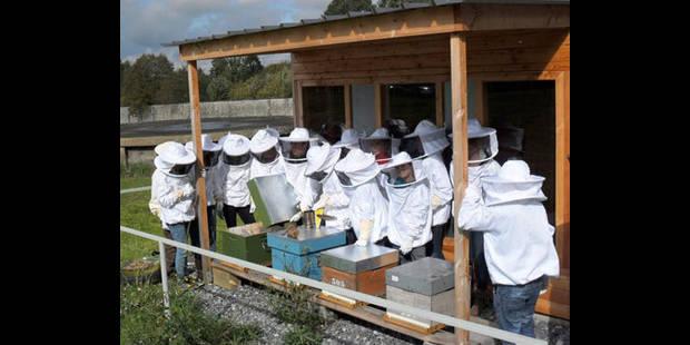 Quatre ruches didactiques à la Providence