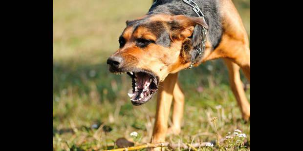 Un chien et trois victimes  de morsures