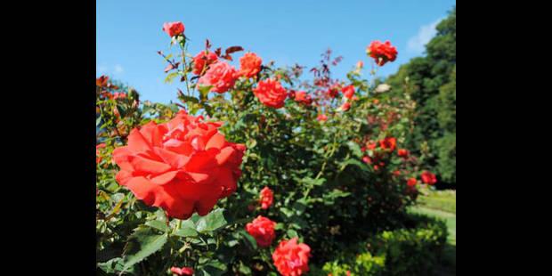 L'autre fête A la rose