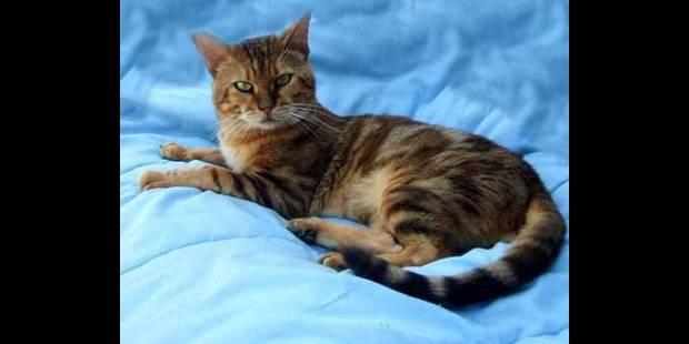 Les plus beaux chats du monde for Le plus beau canape du monde