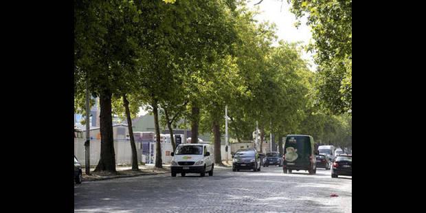 Campagne de mesures de vitalité des platanes de l'avenue du Port