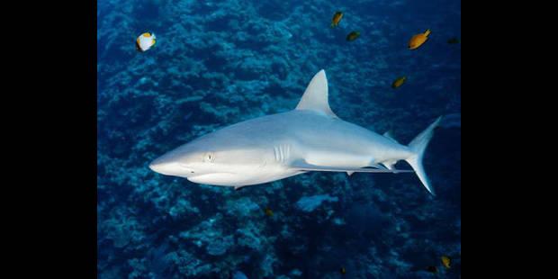 Un adolescent tué par un requin en Nouvelle-Calédonie - La DH