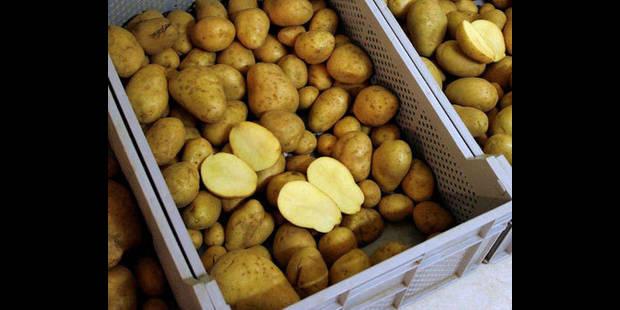 Les pommes de terre plus chères en 2011
