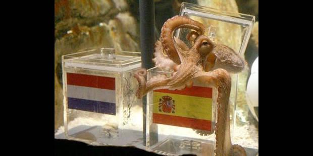 Paul le poulpe honoré par une ville espagnole