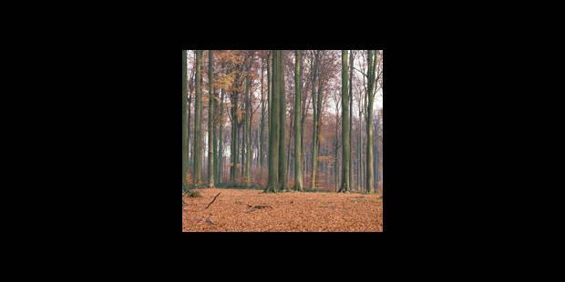 Frappeur fou en forêt de Soignes - La DH