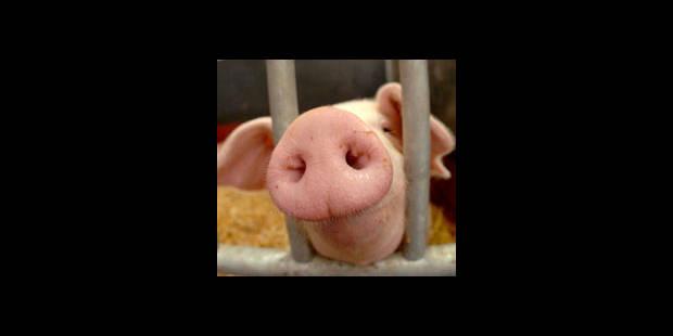 Grippe porcine: De nombreux morts au Mexique, des malades aux USA - La DH