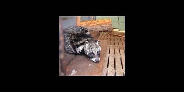 Les zoos belges au pilori - La DH