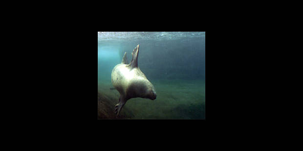 Faune de la mer du Nord mieux protégée - La DH