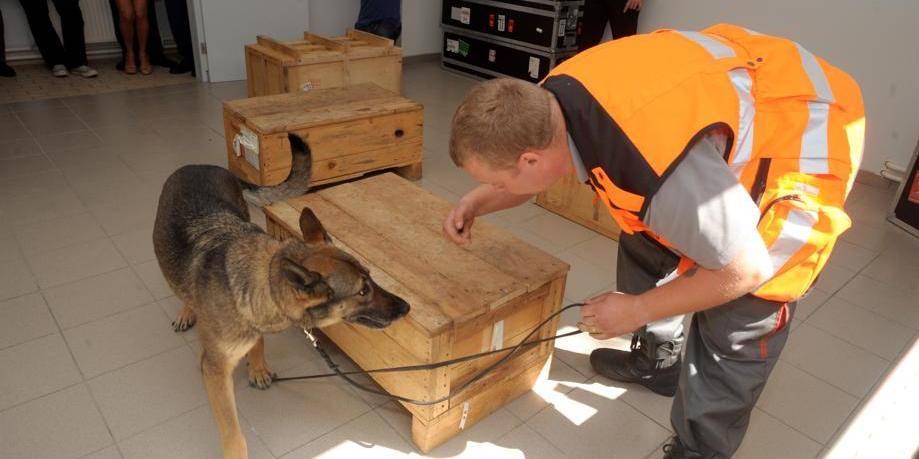 Des chiens formés pour l'aéroport