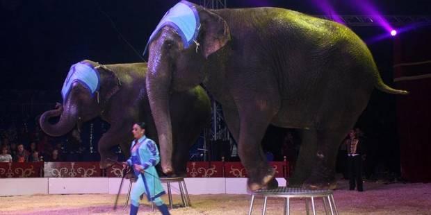 """Interdiction des animaux sauvages dans les cirques: """"Une perte d'environ 100.000 € !"""" - La DH"""