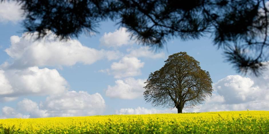 3.000 arbres belges au Tadjikistan
