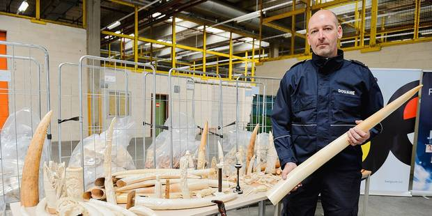 """1,5 tonne d'ivoire en poussière: """"Un symbole"""" - La DH"""