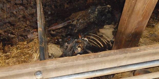 Un charnier de bovins découvert à Regné - La DH