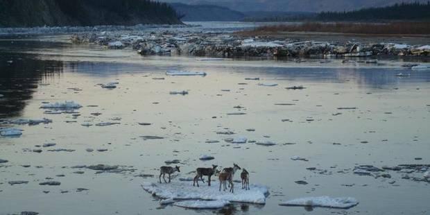 Séisme de magnitude 8 au large de l'Alaska - La DH