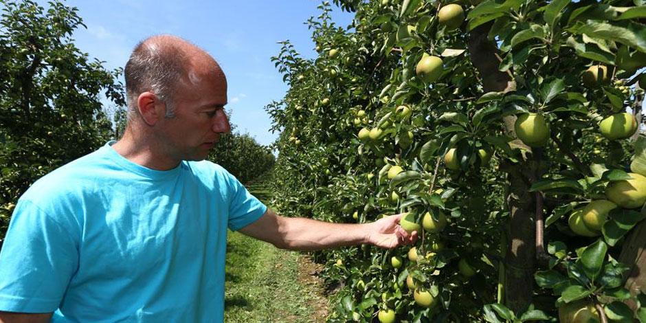 Les pommes et les poires arriveront plus t�t