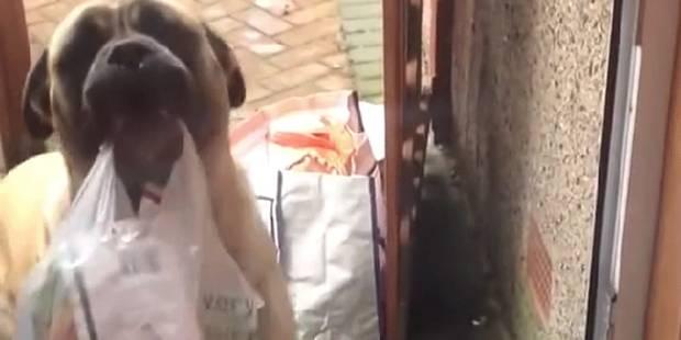 Ce chien porte vos courses - La DH