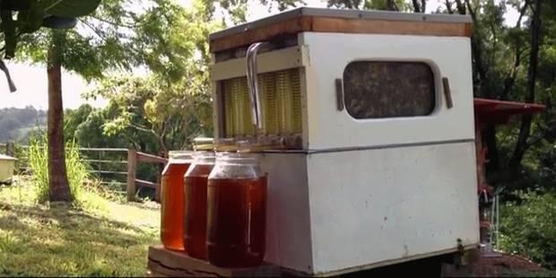 Une ruche révolutionnaire qui va changer la vie des apiculteurs - La DH