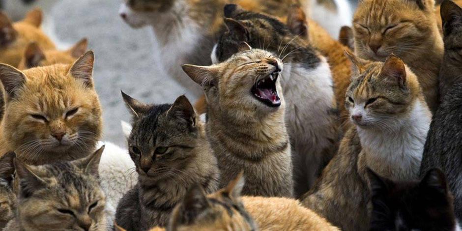 Aoshima, l'île où les chats sont rois