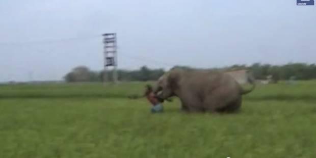 Il se fait charger deux fois par un éléphant mais survit malgré tout (VIDÉO) - La DH