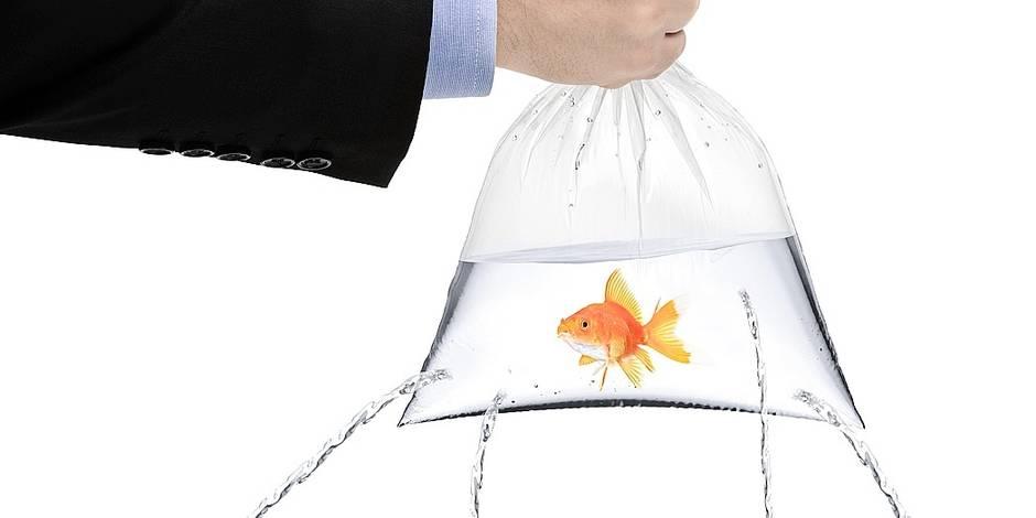 Gagner un poisson rouge à la foire, c'est terminé !
