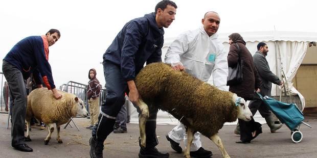 Une formation pour bien tuer les moutons - La DH
