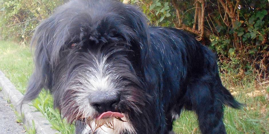 Cruauté: il jette son chien dans l'Eau d'Heure
