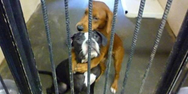 Cette photo poignante a sauvé la vie de ces deux chiens - La DH