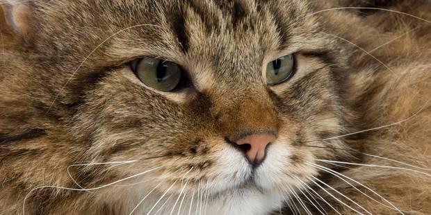 Maltraitance animale: six mois de prison ferme pour avoir tué trois chats, dont un à coups de marteau - La DH