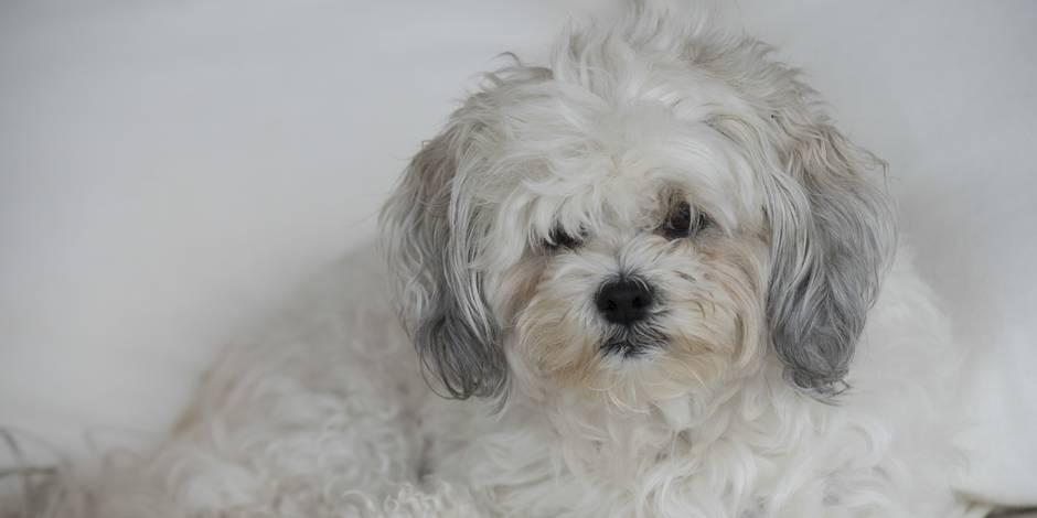 Animaux empoisonnés à Guignies: la tête d'un tueur de chiens et chats mise à prix!